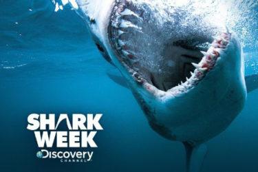 JDT-Shark-Week-Photo-Updated-2